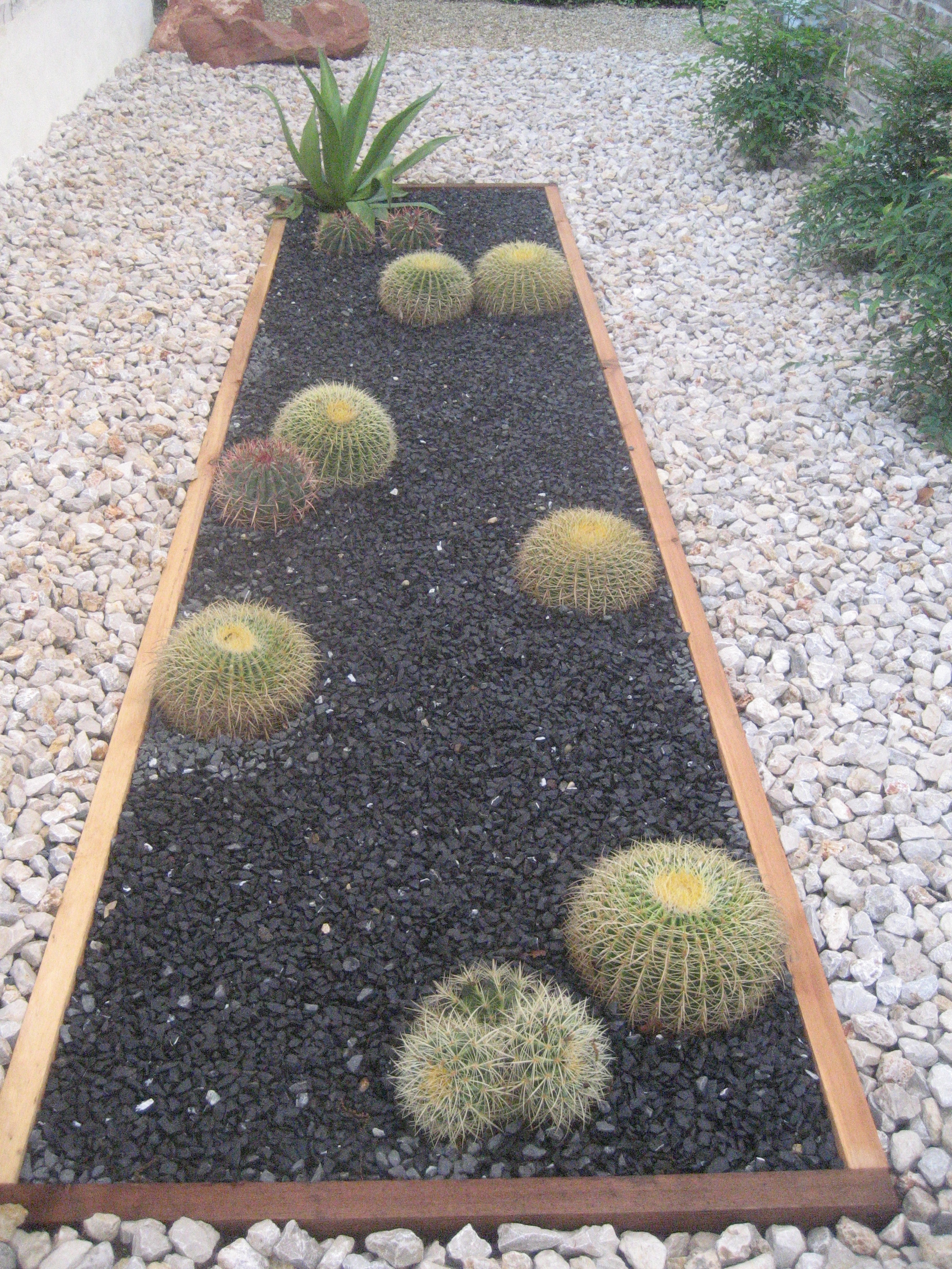 As This Garden Matures The Perfectly Shaped Barrel Cactus Will Continue To  Grow Wider And A Bit Taller, While The Agave Will Reach Up To 4 To 5 Feet  ...